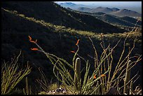 Ocotillo and mountain ridges. Saguaro National Park ( color)