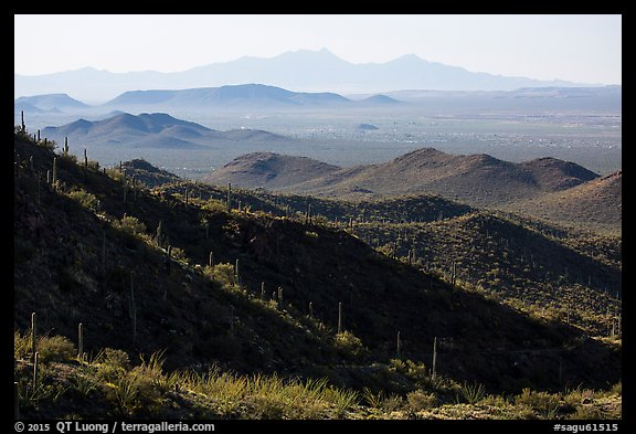 Desert mountains with saguaro-covered ridges. Saguaro National Park (color)