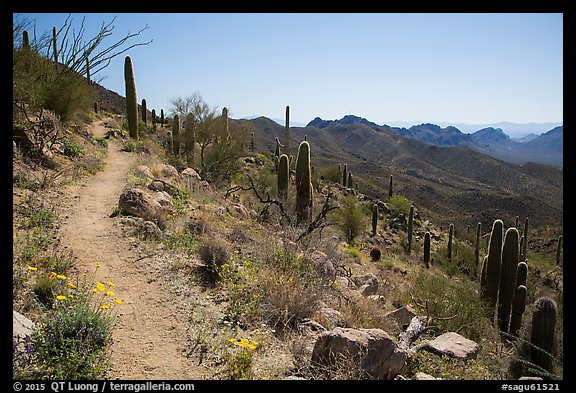 Hugh Norris Trail. Saguaro National Park (color)