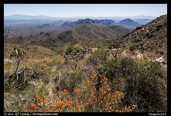 Wildflowers and Tucson Mountains from Wasson Peak. Saguaro National Park (color)