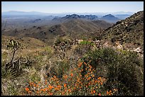 Wildflowers and Tucson Mountains from Wasson Peak. Saguaro National Park ( color)