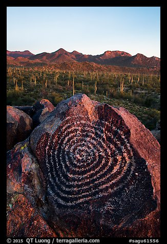 Spiral petroglyph and Tucson Mountains at sunset. Saguaro National Park (color)