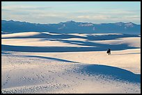 Couple hiking on dunes. White Sands National Park ( color)