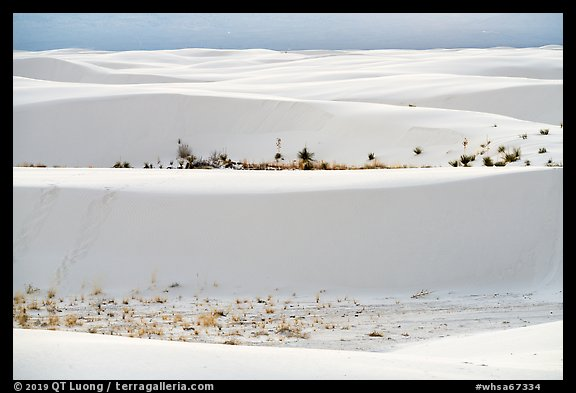 Dune ridges and dune vegetation. White Sands National Park (color)