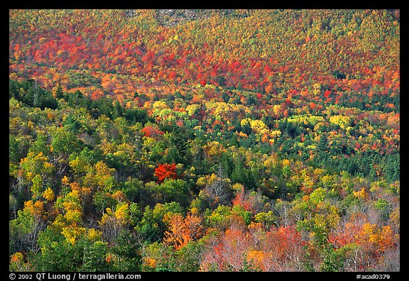 Valley filled  with trees in autumn foliage. Acadia National Park (color)