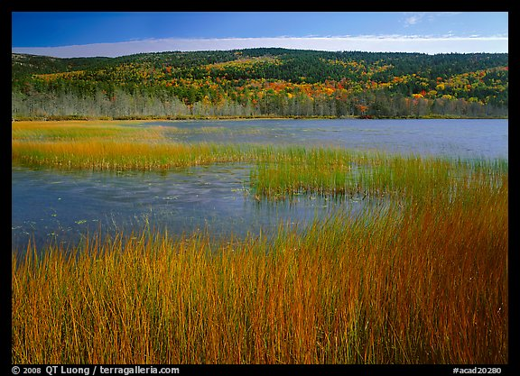 Reeds, pond, and hill with fall color. Acadia National Park (color)