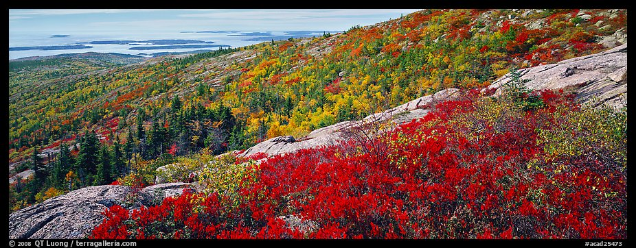 Autumn landscape with brightly colors shrubs and trees. Acadia National Park (color)