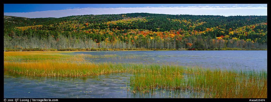 Marsh and hill in autumn foliage. Acadia National Park (color)