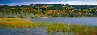 Marsh and hill in autumn foliage. Acadia National Park (Panoramic color)