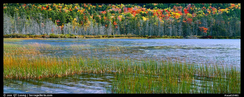 Pond, reeds and trees in autumn. Acadia National Park (color)