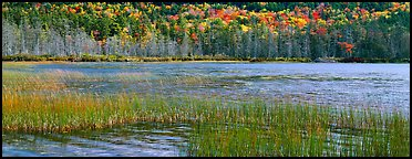 Pond, reeds and trees in autumn. Acadia National Park (Panoramic color)