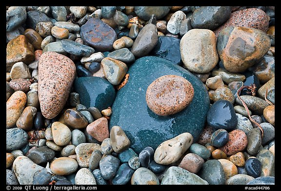 Colorful pebbles shining in the rain. Acadia National Park (color)