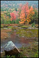 Pond in the rain with trees in fall foliage. Acadia National Park, Maine, USA.