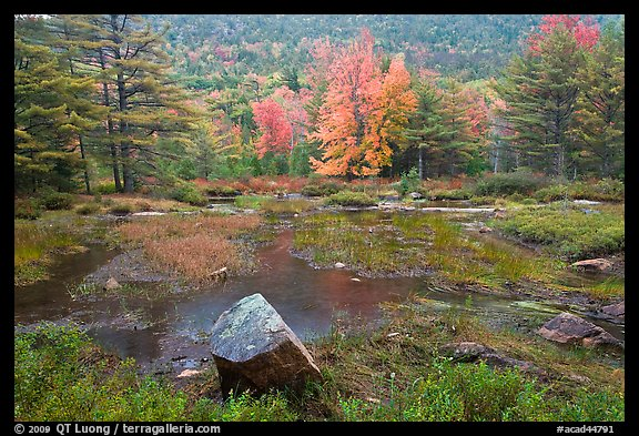 Pond in rainy weather and trees in autumn foliage. Acadia National Park (color)