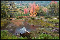 Pond in rainy weather and trees in autumn foliage. Acadia National Park, Maine, USA.