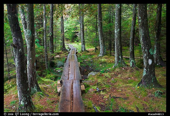 Boardwalk in wet forest environment. Acadia National Park (color)