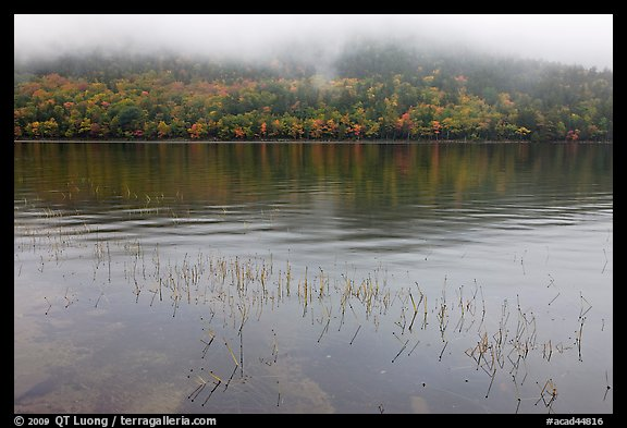 Reeds, hillside in autumn foliage, and fog, Jordan Pond. Acadia National Park (color)