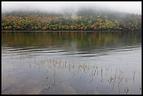 Reeds, hillside in autumn foliage, and fog, Jordan Pond. Acadia National Park, Maine, USA.