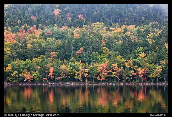 Hillside with trees in autumn colors and pond reflections. Acadia National Park (color)