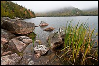 Jordan pond shore in a fall misty day. Acadia National Park, Maine, USA.