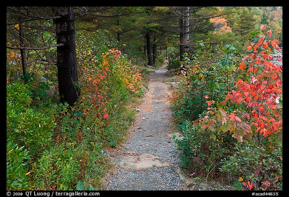 Trail in autumn on Jordan Pond shores. Acadia National Park (color)
