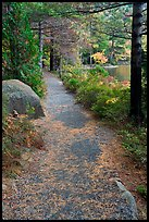 Trail in the fall on the shore of Jordan Pond. Acadia National Park ( color)
