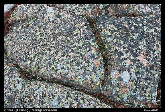 Multicolored lichen on granite slab, Cadillac Mountain. Acadia National Park (color)