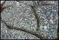 Multicolored lichen on granite slab, Cadillac Mountain. Acadia National Park, Maine, USA.