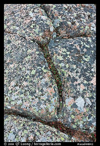 Granite slab with cracks and lichen, Mount Cadillac. Acadia National Park (color)