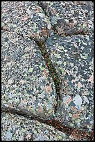 Granite slab with cracks and lichen, Mount Cadillac. Acadia National Park, Maine, USA.