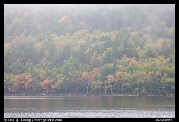 Foggy autumn slopes, Jordan Pond. Acadia National Park (color)