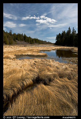Grasses and pond, Schoodic Peninsula. Acadia National Park (color)