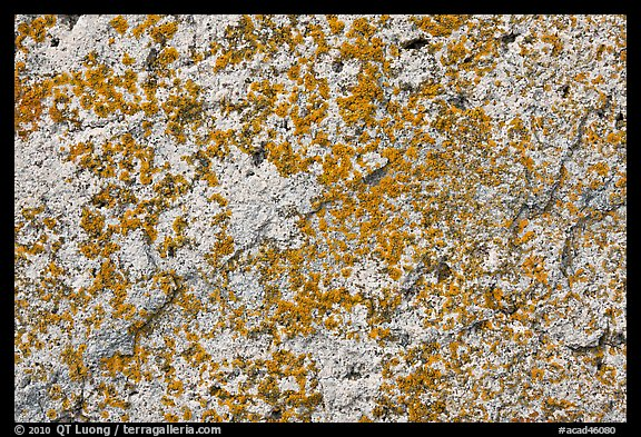 Lichens on light granite, Schoodic Peninsula. Acadia National Park (color)