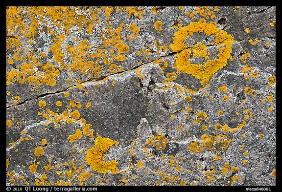Close-up of lichen on granite, Schoodic Peninsula. Acadia National Park (color)