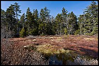 Bog and forest, Isle Au Haut. Acadia National Park, Maine, USA. (color)