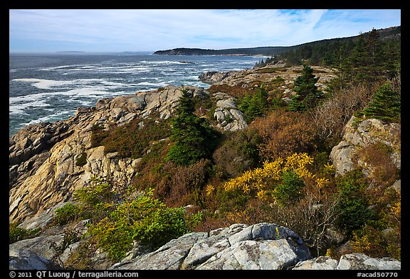 Berry foliage on jagged coast. Acadia National Park (color)