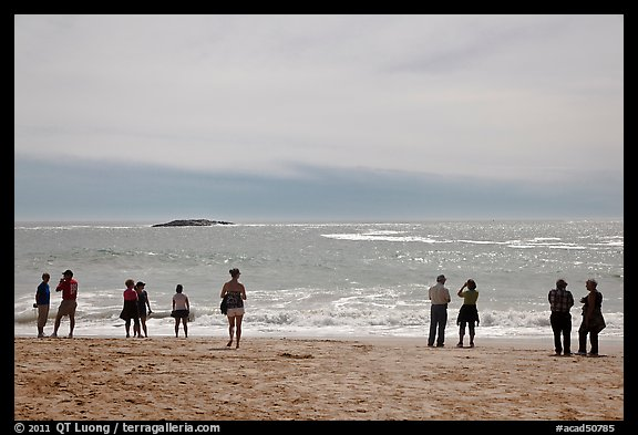 People standing on Sand Beach. Acadia National Park (color)
