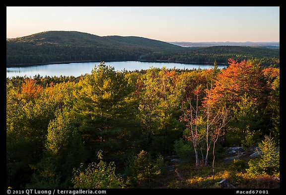 Trees and Eagle Lake, sunset. Acadia National Park (color)
