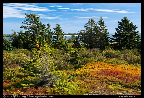 Autumn colors, Little Moose Island, Schoodic Peninsula. Acadia National Park (color)