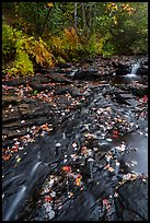 Duck Brook with fallen leaves. Acadia National Park ( color)