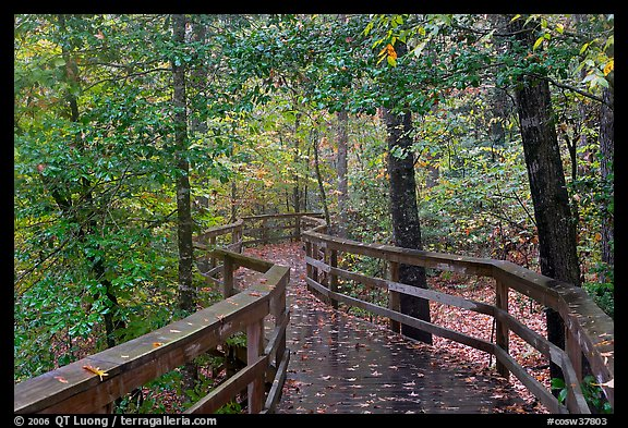 Boardwalk, forest in autumn colors. Congaree National Park (color)