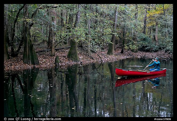 Man paddling a red canoe on Cedar Creek. Congaree National Park (color)