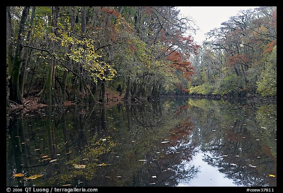 Cedar Creek. Congaree National Park (color)