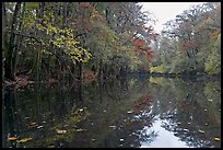 Cedar Creek. Congaree National Park, South Carolina, USA. (color)