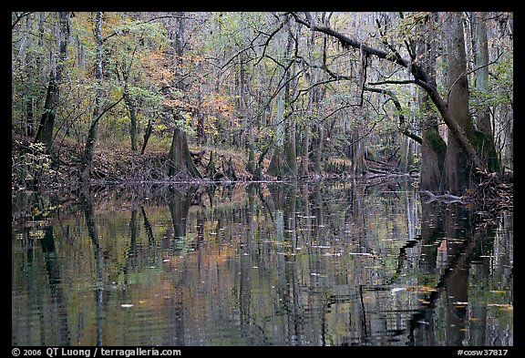 Cedar Creek with trees in autumn colors reflected. Congaree National Park, South Carolina, USA.