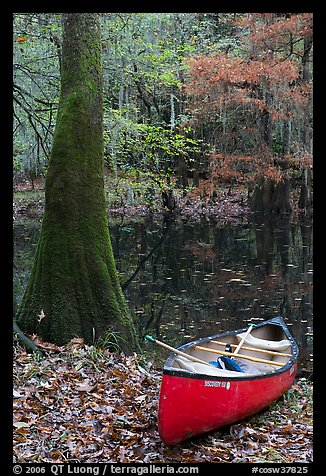 Red canoe on banks of Cedar Creek. Congaree National Park (color)