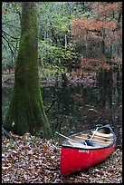 Red canoe on banks of Cedar Creek. Congaree National Park, South Carolina, USA. (color)