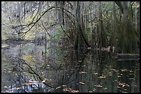 Arched branches with spanish moss above Cedar Creek. Congaree National Park, South Carolina, USA.