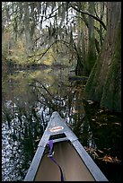 Canoe prow and swamp trees growing at the base of Cedar Creek. Congaree National Park, South Carolina, USA. (color)