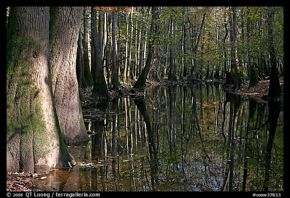 Sunny forest reflections in Cedar Creek. Congaree National Park (color)